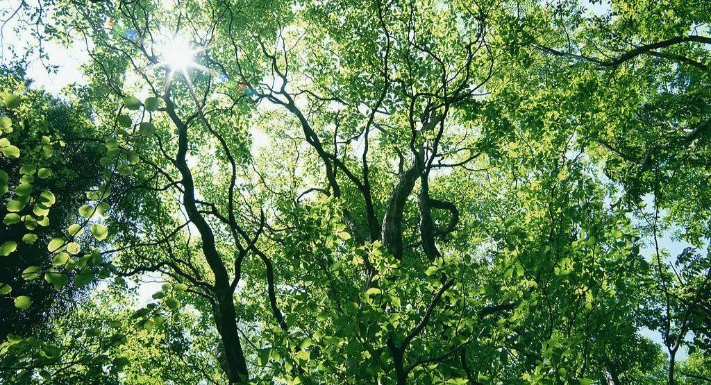 新森林法将实施,对林业发展带来哪些影响?